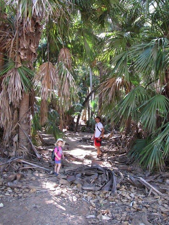 Mataranka Botanic Walk