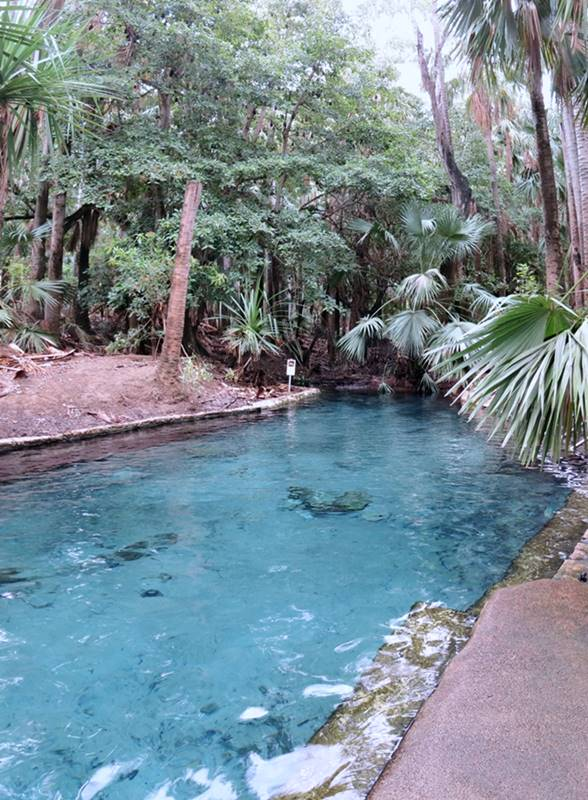 Mataranka Hot Springs Pool