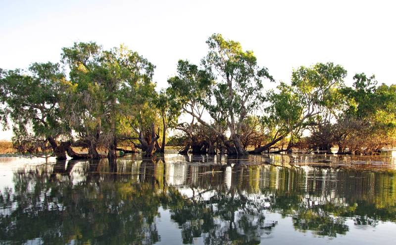 Corroboree Billabong Wetlands