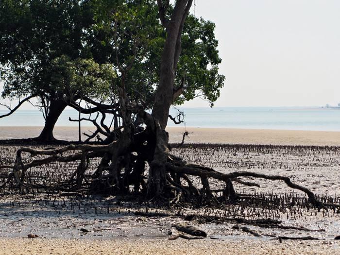 Crab Claw Island Low Tide