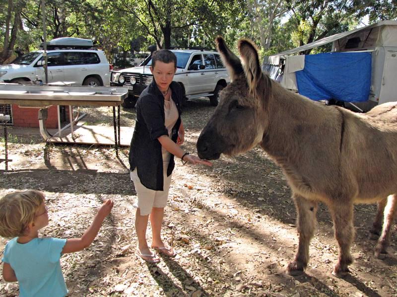 Wyndham - Feeding the donkey