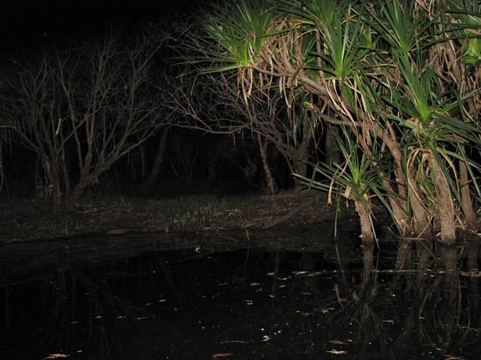 Muirella Campground - Kakadu at Night