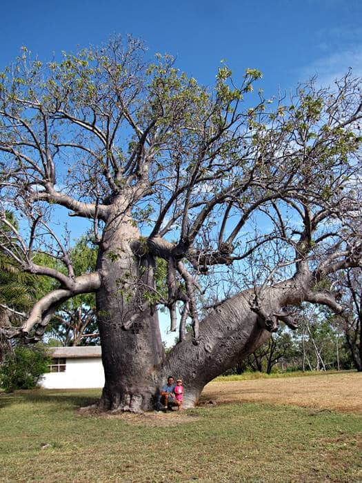 Baob Tree at Bullita Homestead