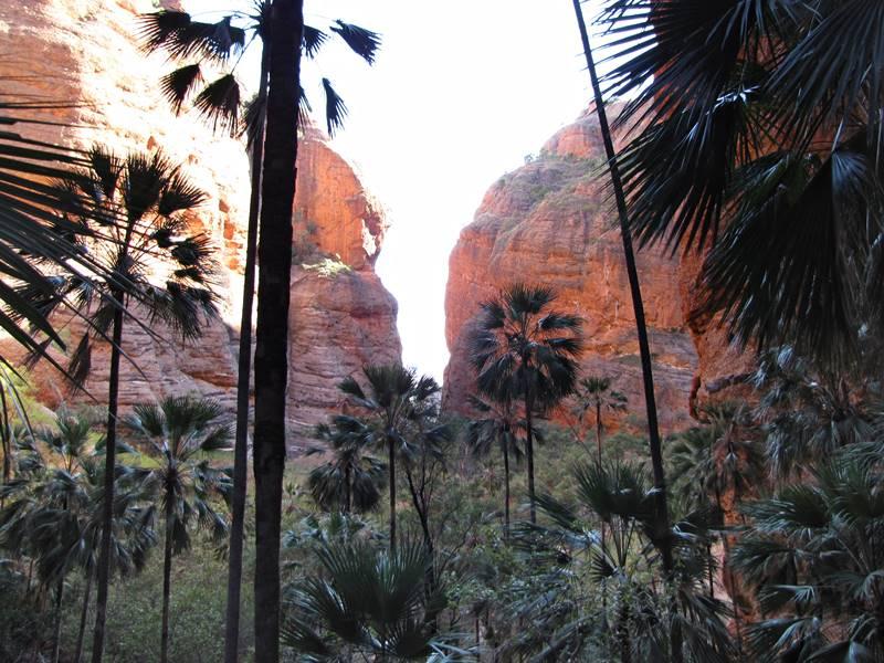 Bungle Bungles - Mini Palms Walk