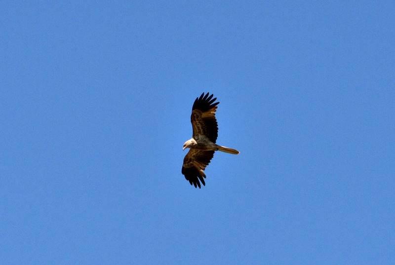 Wyndham - Kites Everywhere