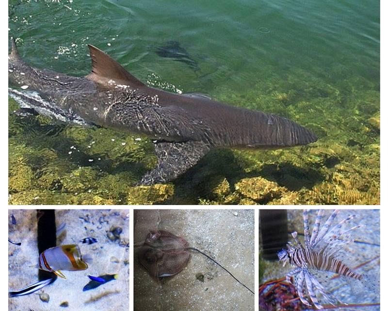 Denham - Ocean Park Aquarium