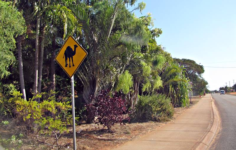 Broome - Camels on road sign