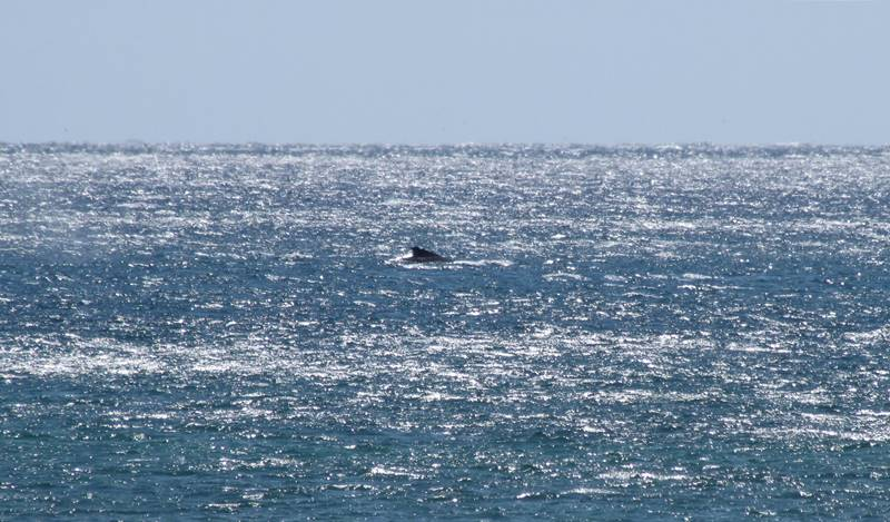 Exmouth Humpback Whale Watching