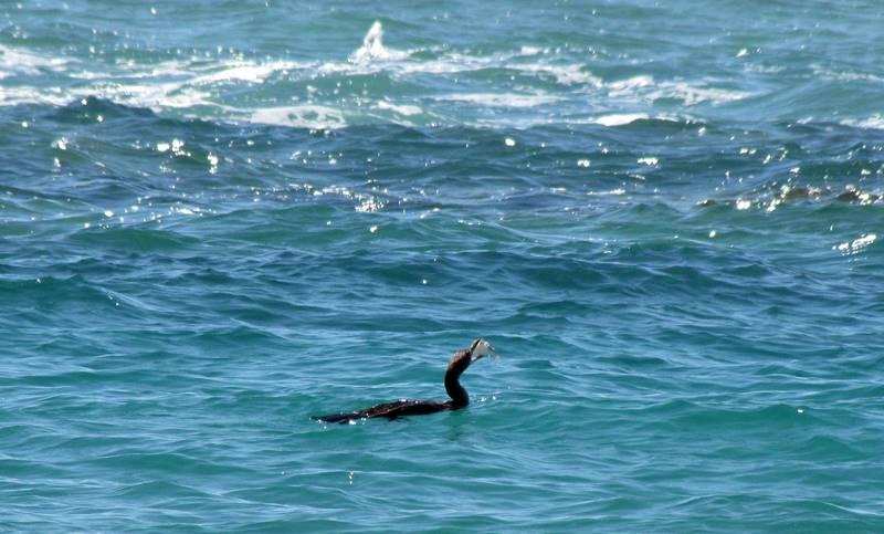 Kalbarri Cliffs Fishing