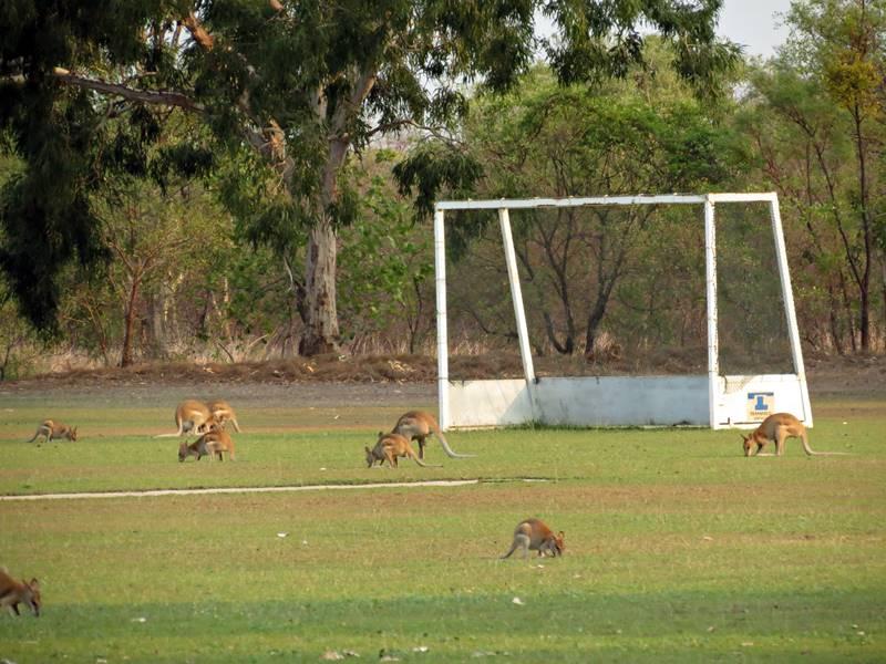 Wallabies soccer team