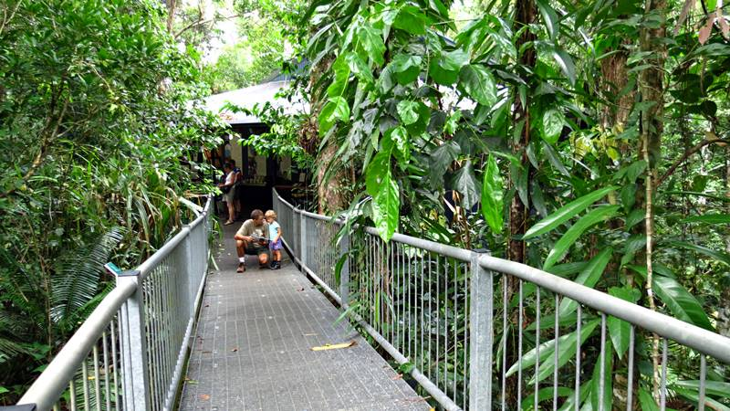 Daintree Discovery Centre - tree suspended walk