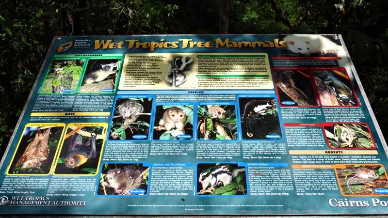 Daintree National Park - Rainforest Animals