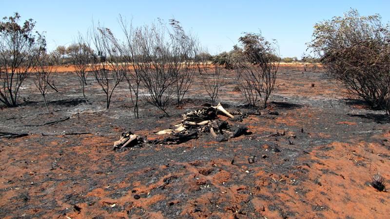 Burnt bush on Plenty Highway