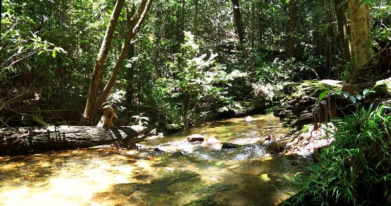 Davies Creek