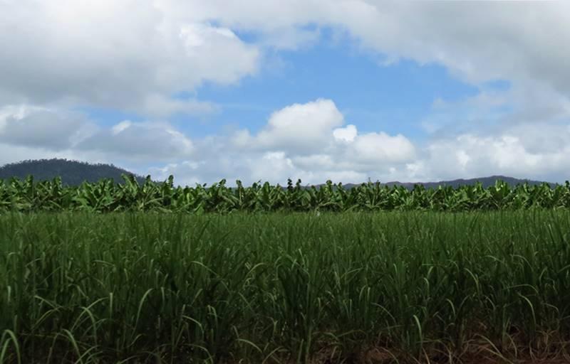 Sugar cane and banana plantation around Innisfail