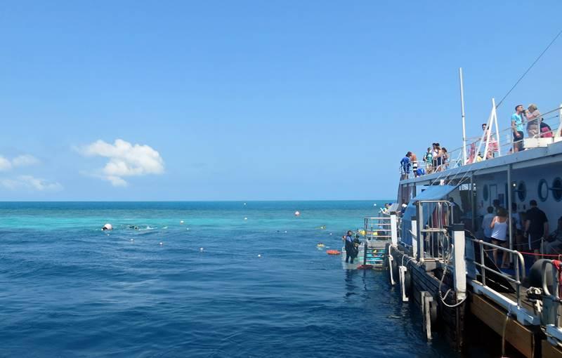 Reef World Platform