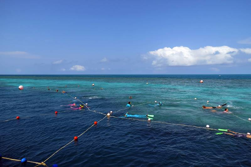 Snorkeling around the ropes at Reef World