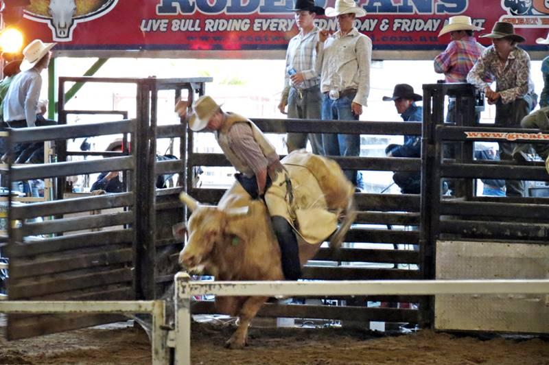 Bull Riding at Rockampton Rodeo