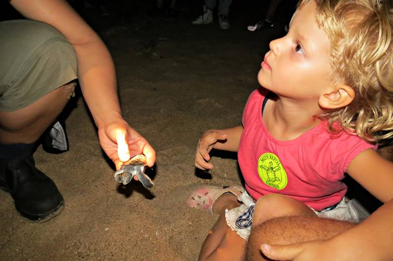 Little turtle hatchlings on the beach in Mon Repos