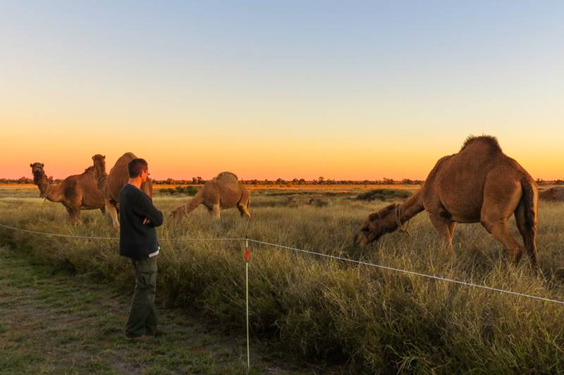 We met a man traveling with 3 camels and wagon through Australian Outback!