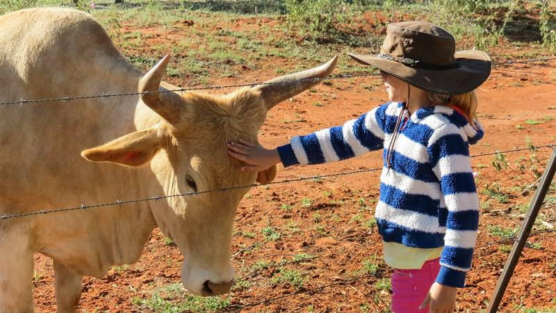 Nell and cow at Barkly Roadhouse